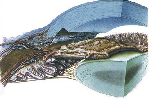 Центр глаукомы в москве